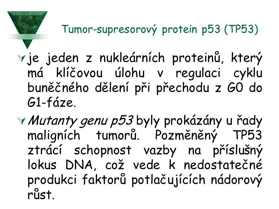 Tumor-supresorový protein p53 (TP53)  je jeden z nukleárních proteinů, který má klíčovou úlohu v regulaci cyklu buněčného dělení při přechodu z G0 do