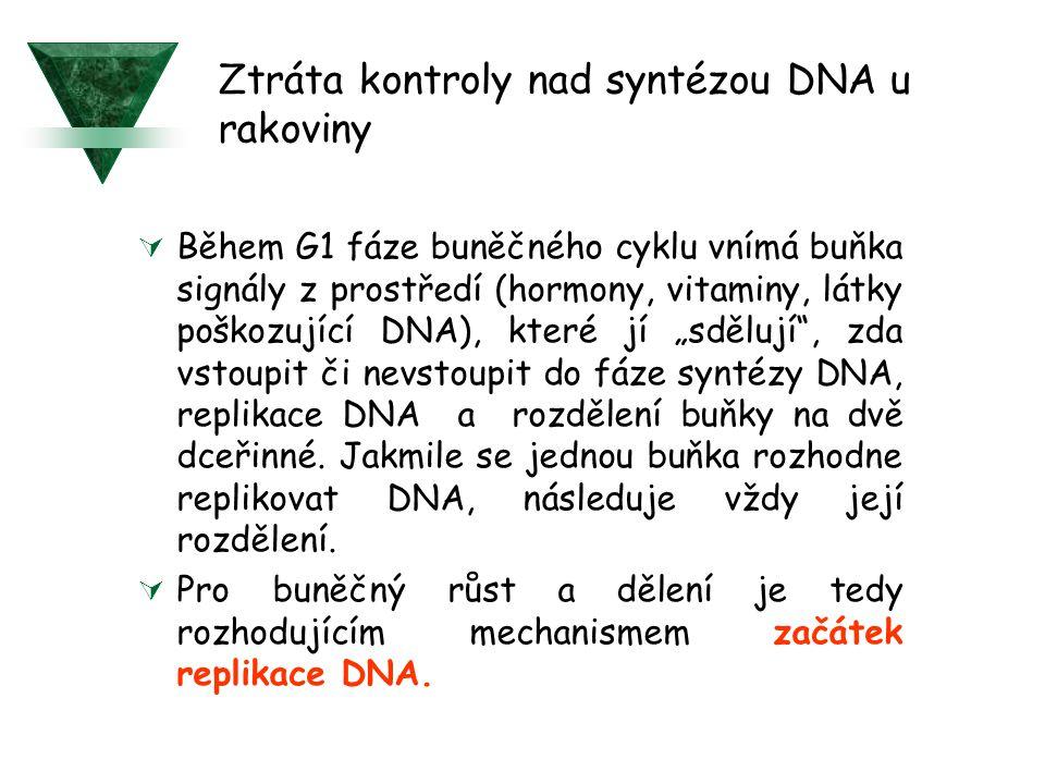 """ Během G1 fáze buněčného cyklu vnímá buňka signály z prostředí (hormony, vitaminy, látky poškozující DNA), které jí """"sdělují"""", zda vstoupit či nevsto"""