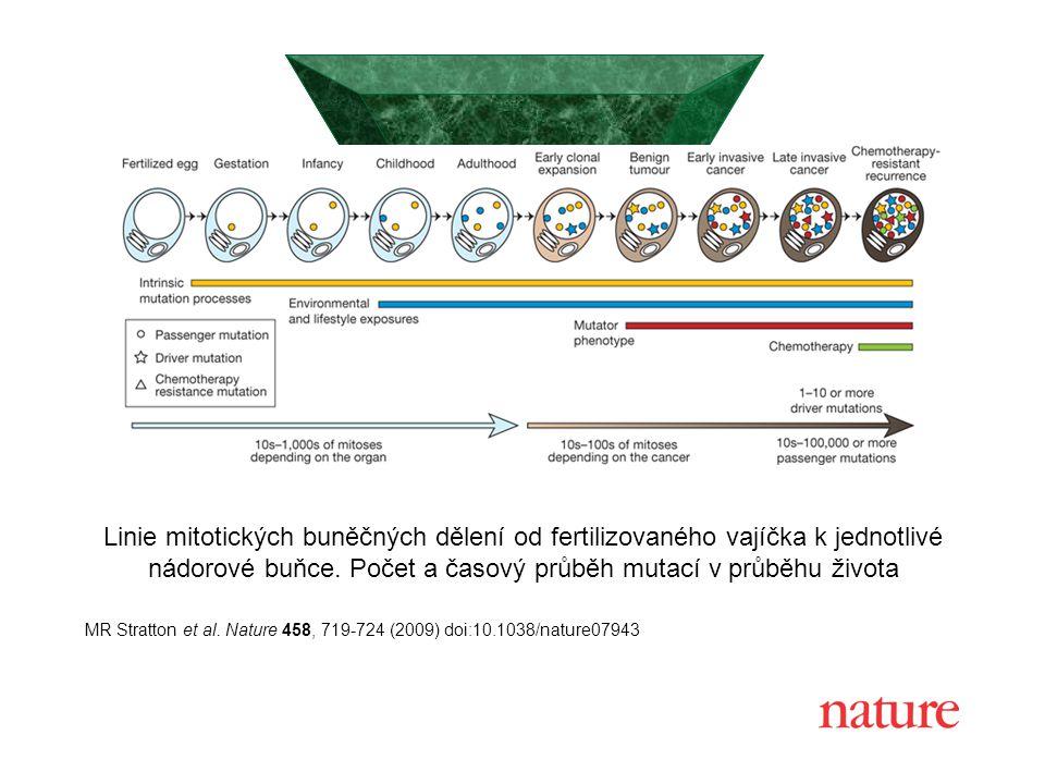MR Stratton et al. Nature 458, 719-724 (2009) doi:10.1038/nature07943 Linie mitotických buněčných dělení od fertilizovaného vajíčka k jednotlivé nádor