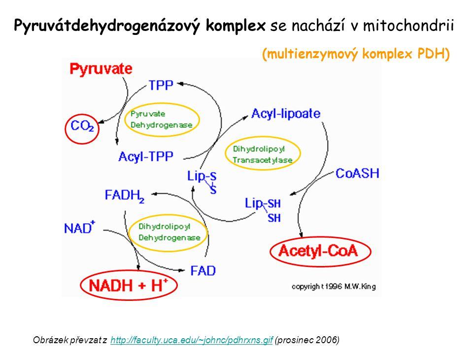 Obrázek převzat z http://faculty.uca.edu/~johnc/pdhrxns.gif (prosinec 2006) http://faculty.uca.edu/~johnc/pdhrxns.gif Pyruvátdehydrogenázový komplex s
