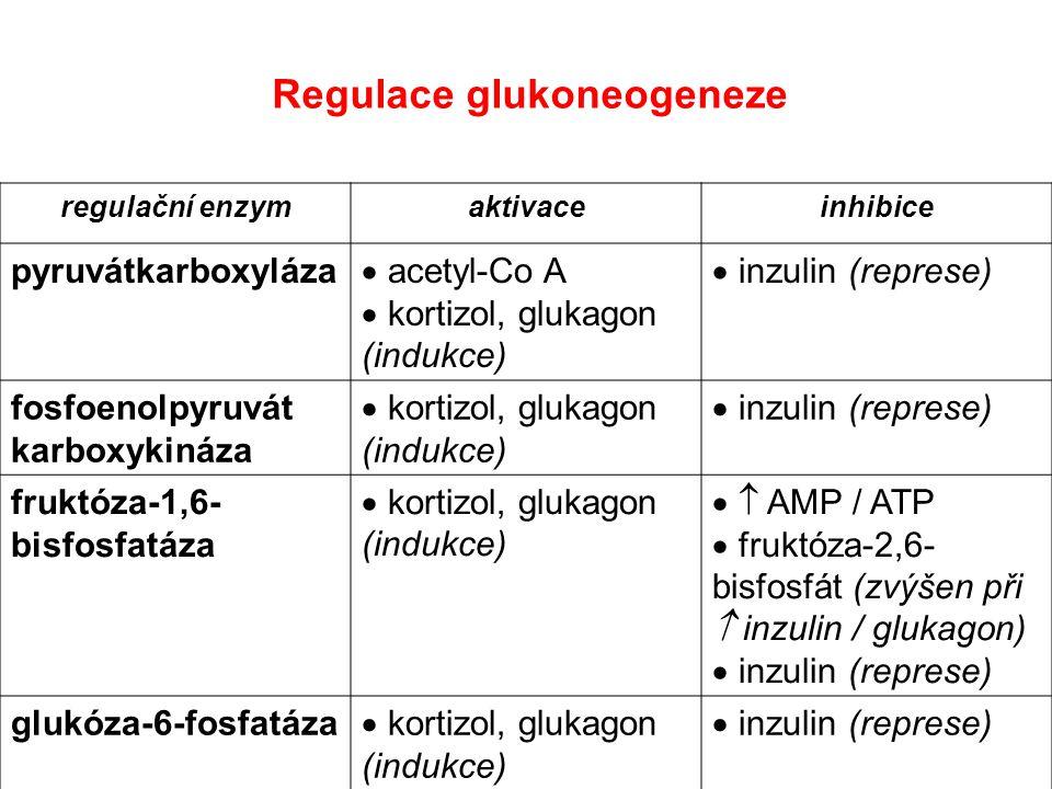 regulační enzymaktivaceinhibice pyruvátkarboxyláza  acetyl-Co A  kortizol, glukagon (indukce)  inzulin (represe) fosfoenolpyruvát karboxykináza  k
