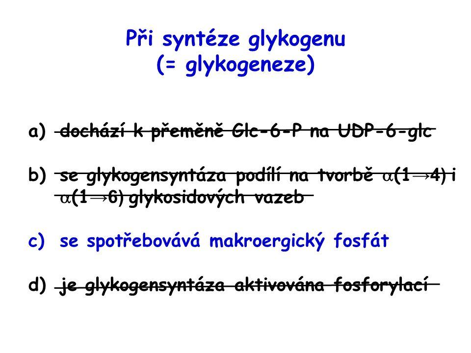 a)dochází k přeměně Glc-6-P na UDP-6-glc b)se glykogensyntáza podílí na tvorbě  (1 →4) i  (1 →6) glykosidových vazeb c)se spotřebovává makroergický