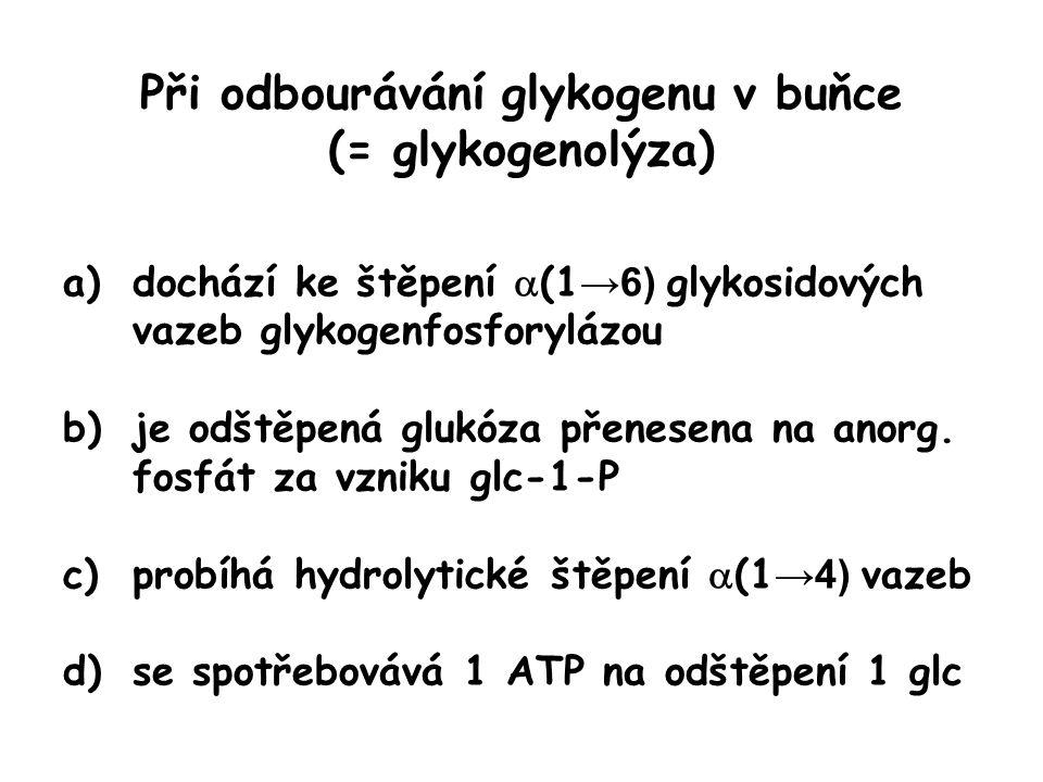 Při odbourávání glykogenu v buňce (= glykogenolýza) a)dochází ke štěpení  (1 →6) glykosidových vazeb glykogenfosforylázou b)je odštěpená glukóza přen