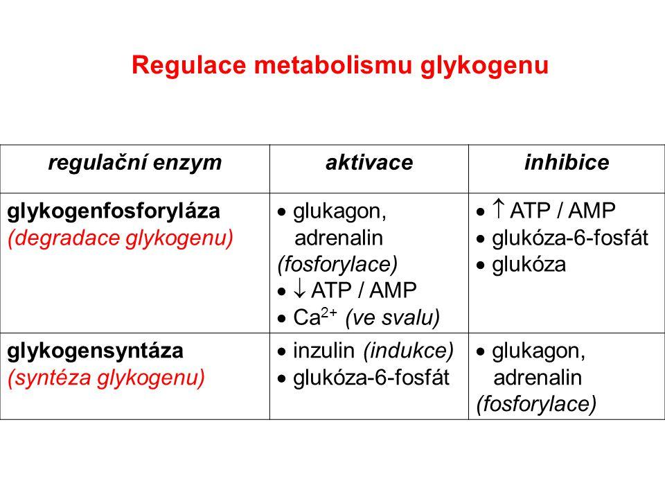 regulační enzymaktivaceinhibice glykogenfosforyláza (degradace glykogenu)  glukagon, adrenalin (fosforylace)   ATP / AMP  Ca 2+ (ve svalu)   ATP