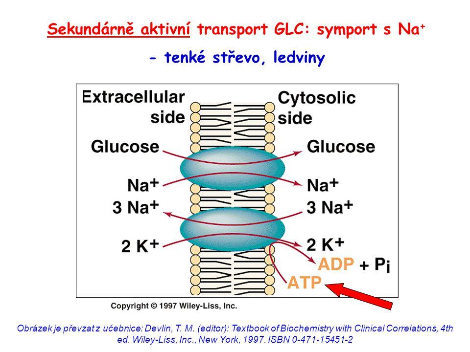 Glukóza může být v těle přeměněna na a)galaktózu: glc-6-P → gal-6-P b)fruktózu: glc → glucitol → fru c)kyselinu glukuronovou: UDP-glc + 2 NAD + → UDP-glukuronát + 2 NADH+H + d)ribózu: glc-6-P → ribulóza-5-P → rib-5-P