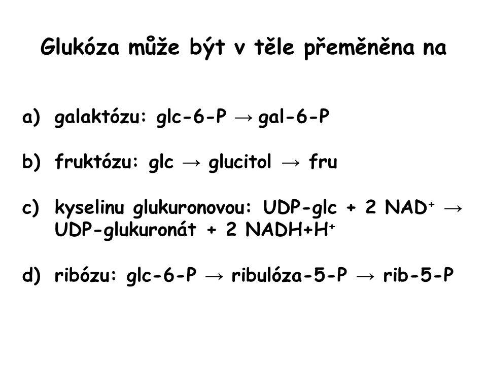 Glukóza může být v těle přeměněna na a)galaktózu: glc-6-P → gal-6-P b)fruktózu: glc → glucitol → fru c)kyselinu glukuronovou: UDP-glc + 2 NAD + → UDP-