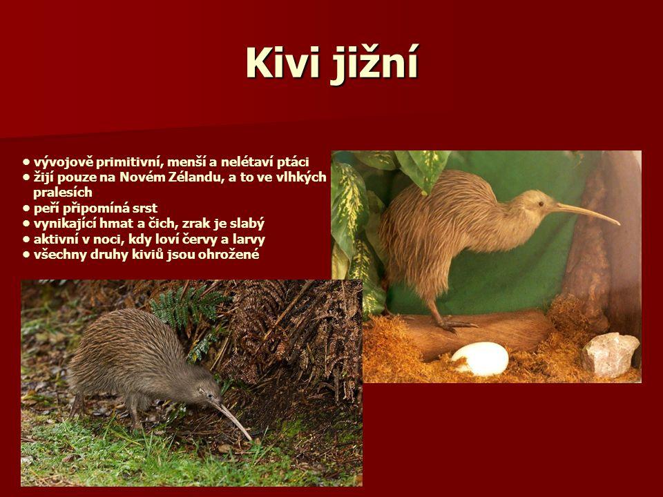 Kivi jižní vývojově primitivní, menší a nelétaví ptáci žijí pouze na Novém Zélandu, a to ve vlhkých pralesích peří připomíná srst vynikající hmat a čich, zrak je slabý aktivní v noci, kdy loví červy a larvy všechny druhy kiviů jsou ohrožené