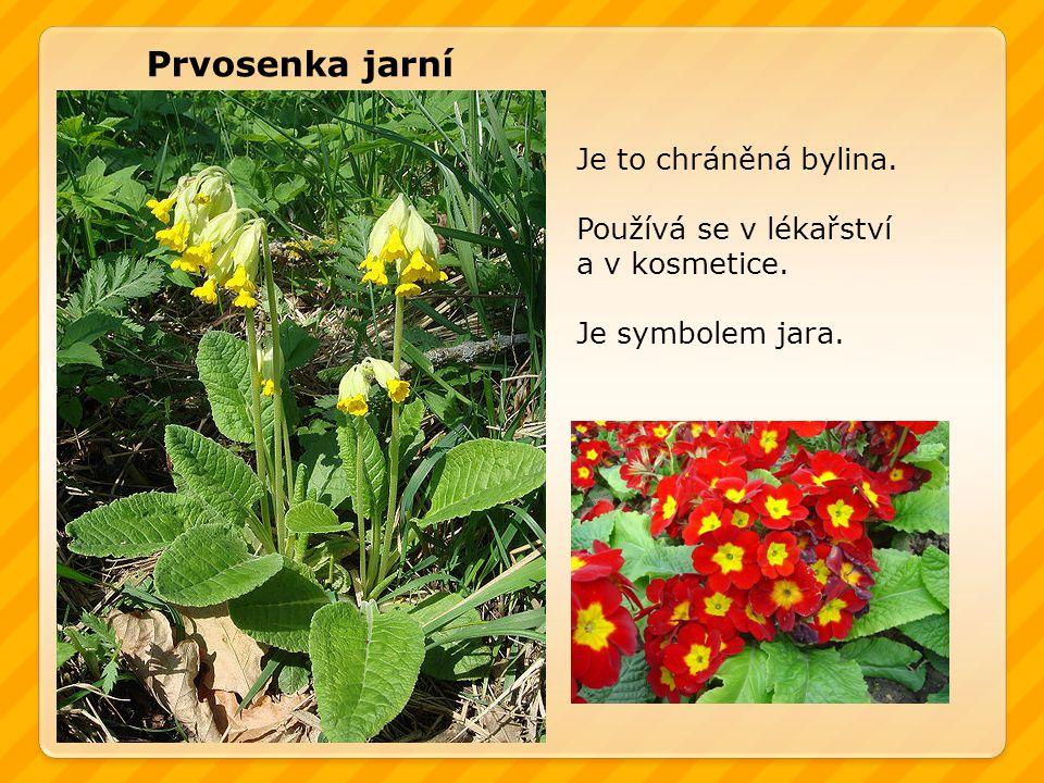 Prvosenka jarní Je to chráněná bylina. Používá se v lékařství a v kosmetice. Je symbolem jara.