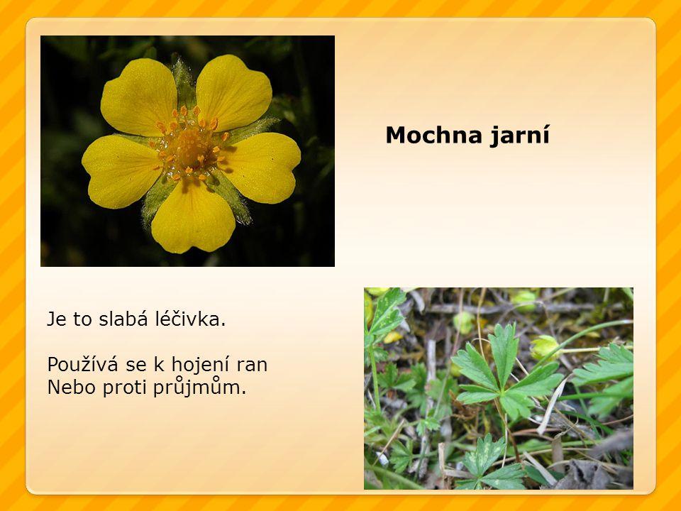 Mochna jarní Je to slabá léčivka. Používá se k hojení ran Nebo proti průjmům.