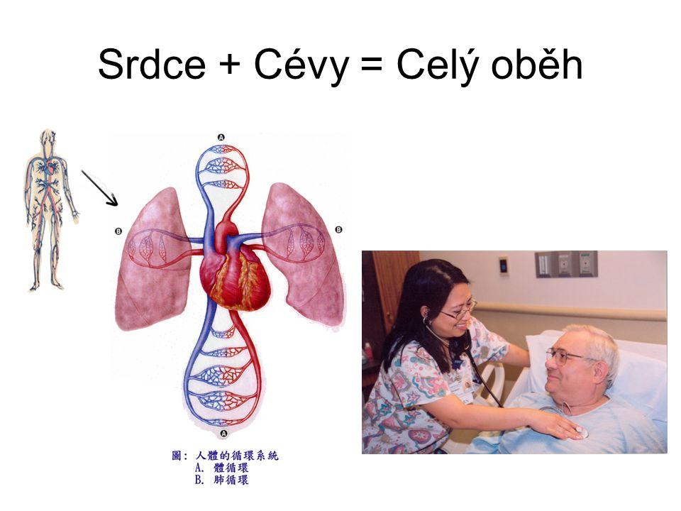 Srdce + Cévy = Celý oběh