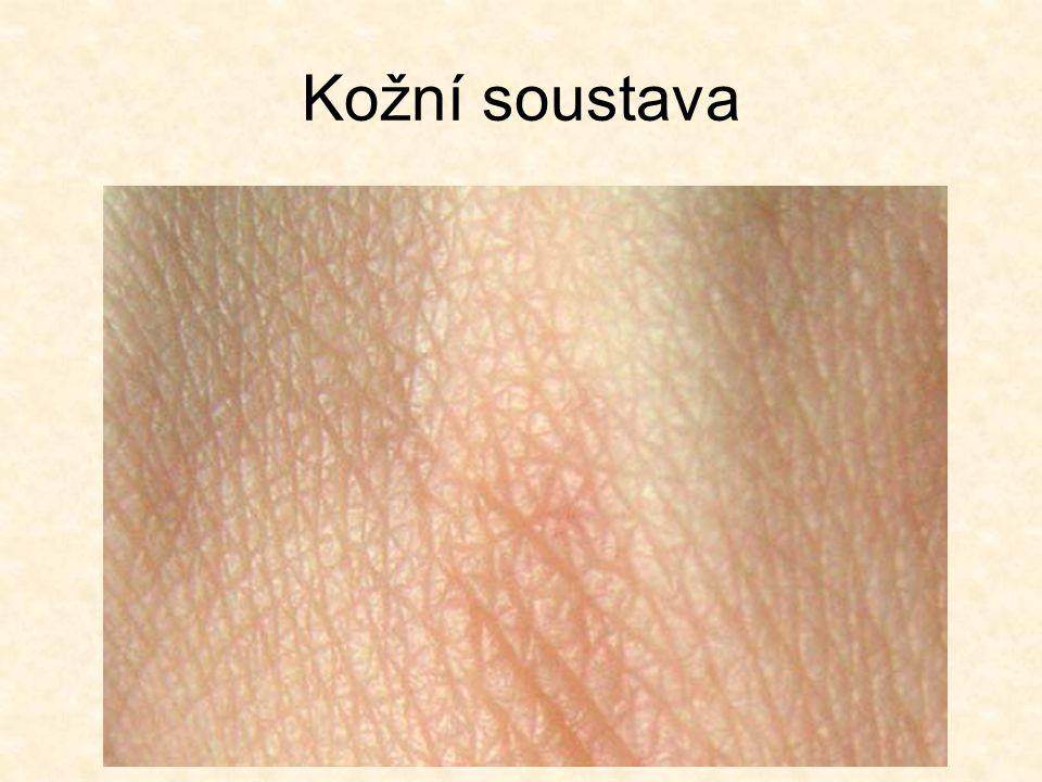 Kožní soustava