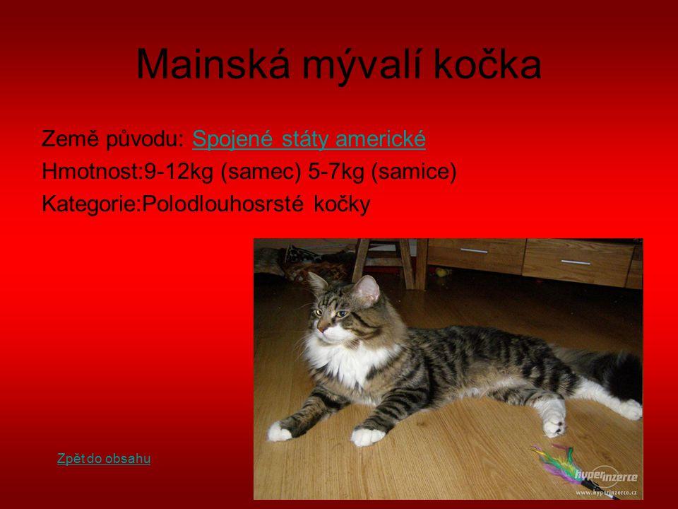 Mainská mývalí kočka Země původu: Spojené státy americkéSpojené státy americké Hmotnost:9-12kg (samec) 5-7kg (samice) Kategorie:Polodlouhosrsté kočky