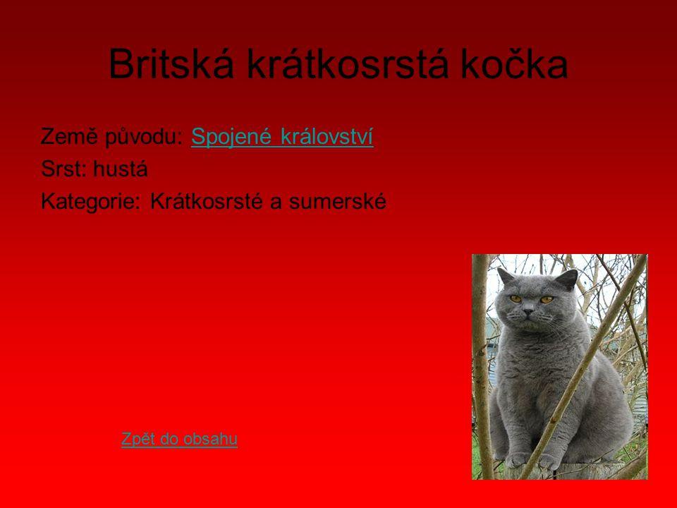 Britská krátkosrstá kočka Země původu: Spojené královstvíSpojené království Srst: hustá Kategorie: Krátkosrsté a sumerské Zpět do obsahu
