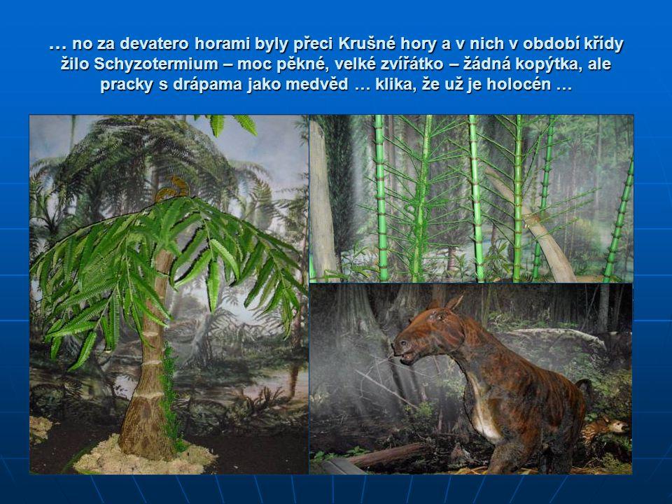 … no za devatero horami byly přeci Krušné hory a v nich v období křídy žilo Schyzotermium – moc pěkné, velké zvířátko – žádná kopýtka, ale pracky s dr