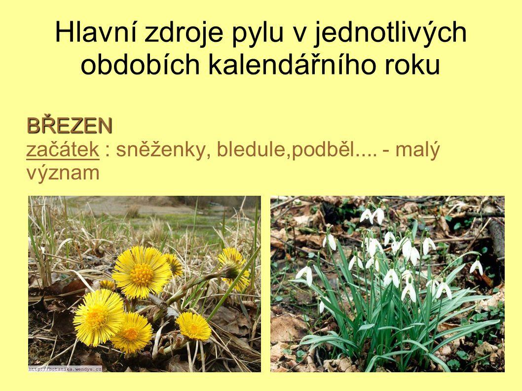 Hlavní zdroje pylu v jednotlivých obdobích kalendářního rokuBŘEZEN začátek : sněženky, bledule,podběl....