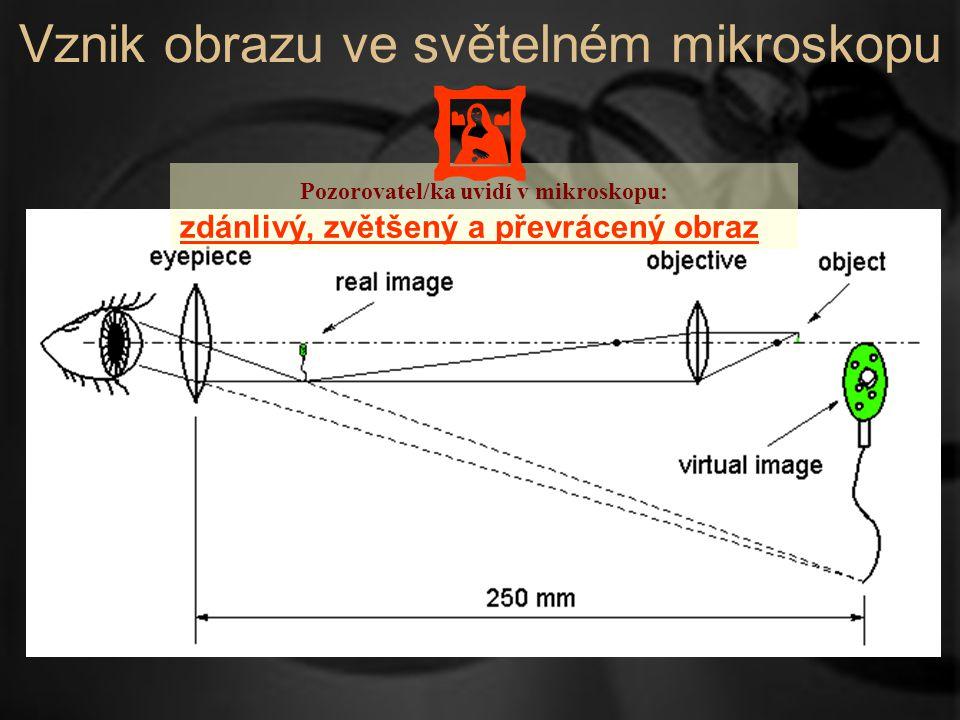 Vznik obrazu ve světelném mikroskopu Pozorovatel/ka uvidí v mikroskopu: zdánlivý, zvětšený a převrácený obraz 