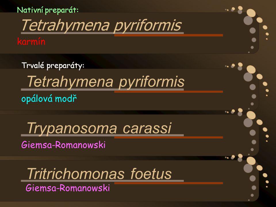 Nativní preparát: Tetrahymena pyriformis karmín Trvalé preparáty: Tetrahymena pyriformis opálová modř Trypanosoma carassi Giemsa-Romanowski Tritrichom