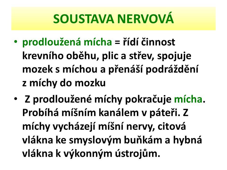 SOUSTAVA NERVOVÁ Schéma nervové soustavy 1 - mozek 2 - páteřní mícha 3 - lícní nerv 4 - první krční nerv 5 - spodní větve hrudnich a krčních nervů 6 - pažní pleteň 7 - bedrokřížová pleteň 8 - horní větve krčních nervů 9 - bederní nervy 10 - křížové nervy 11 - sedací nerv