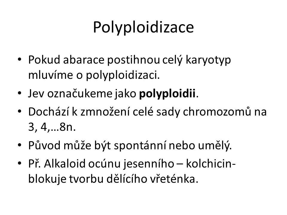 Polyploidizace Pokud abarace postihnou celý karyotyp mluvíme o polyploidizaci. Jev označukeme jako polyploidii. Dochází k zmnožení celé sady chromozom