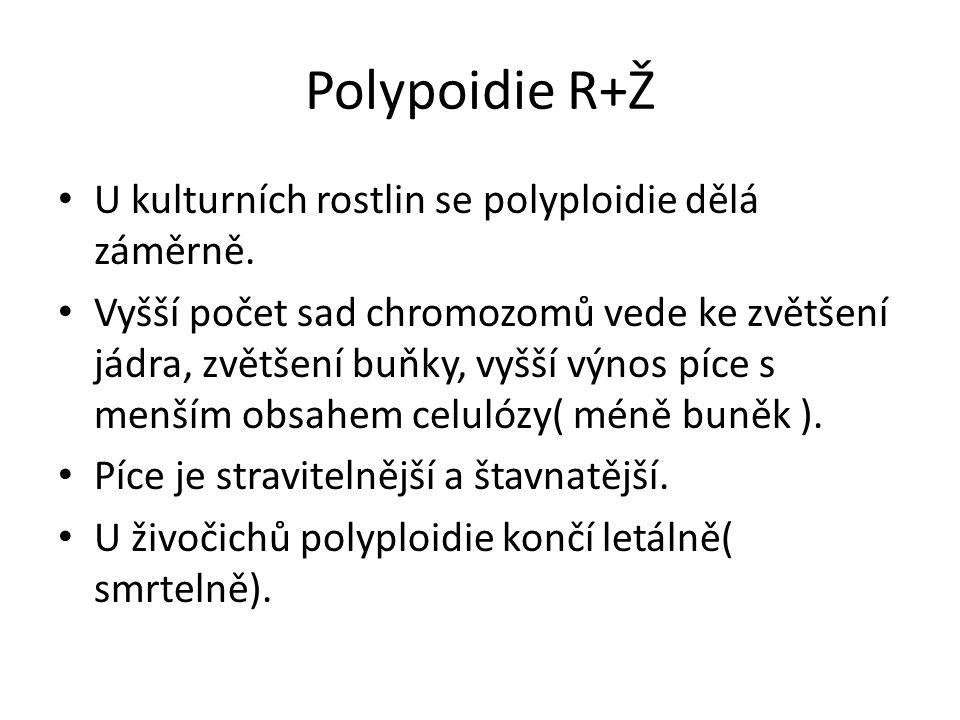 Polypoidie R+Ž U kulturních rostlin se polyploidie dělá záměrně. Vyšší počet sad chromozomů vede ke zvětšení jádra, zvětšení buňky, vyšší výnos píce s