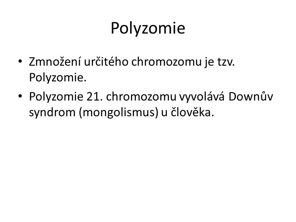 Polyzomie Zmnožení určitého chromozomu je tzv. Polyzomie. Polyzomie 21. chromozomu vyvolává Downův syndrom (mongolismus) u člověka.