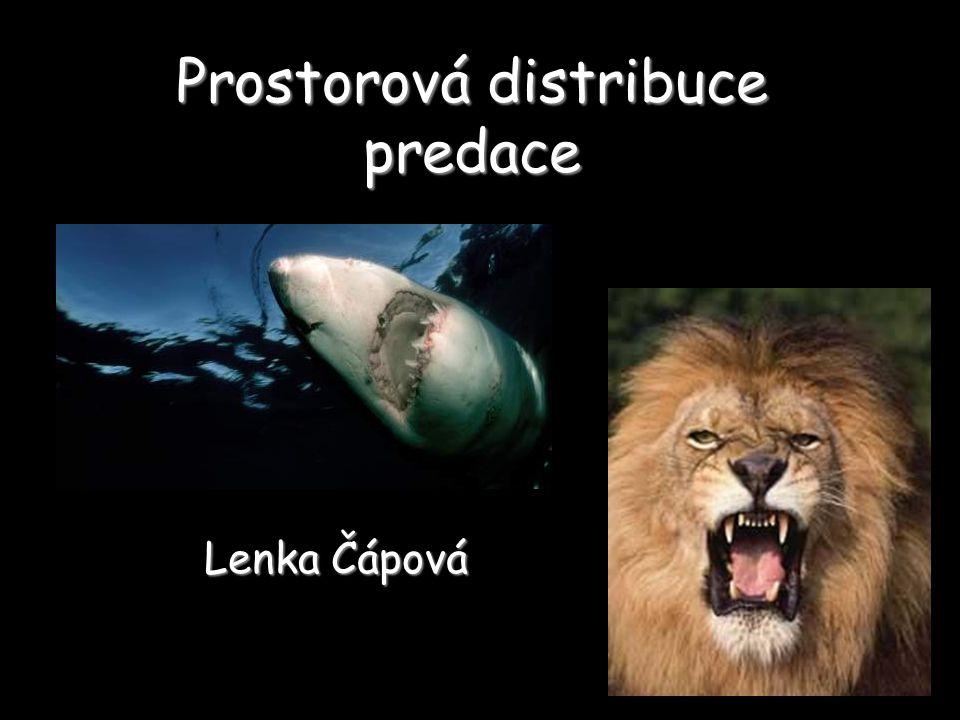 Prostorová distribuce predace Lenka Čápová