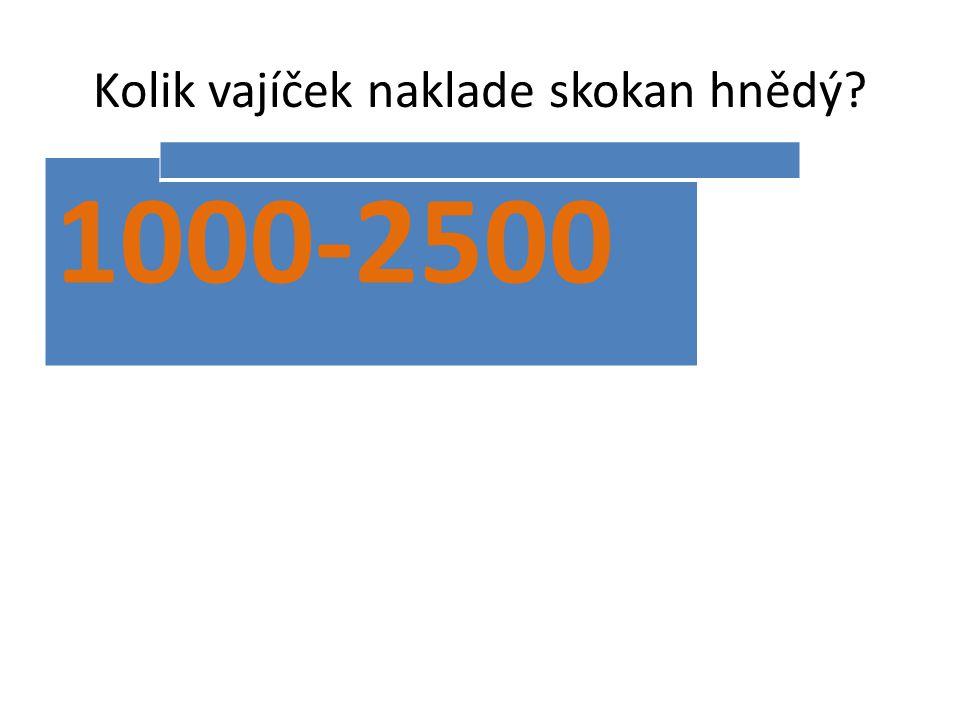 Kolik vajíček naklade skokan hnědý? 1000-2500