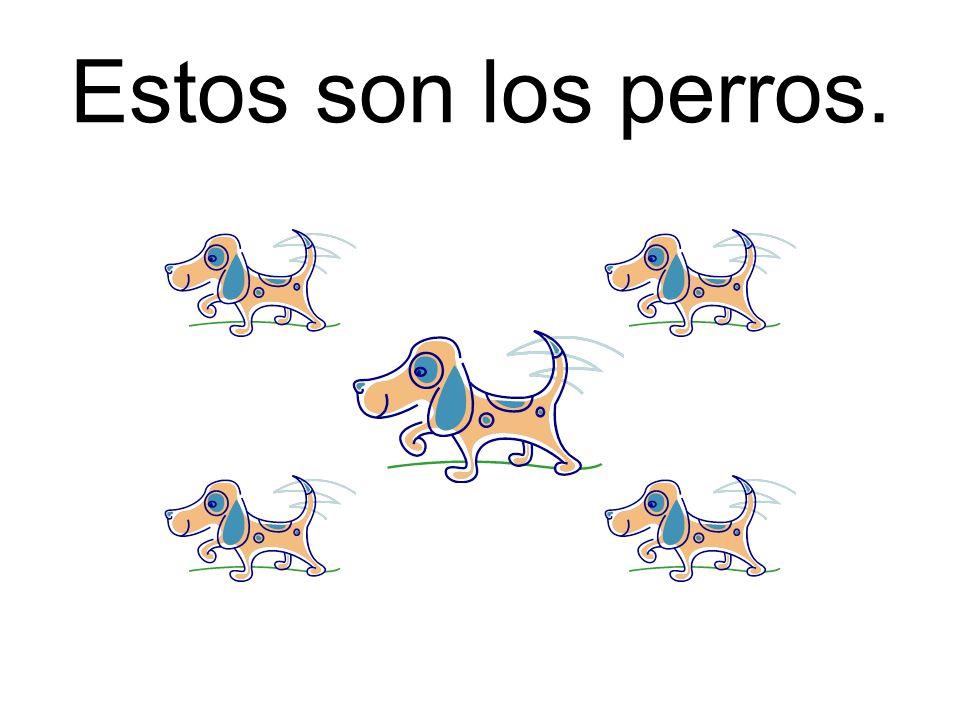 Estos son los perros.
