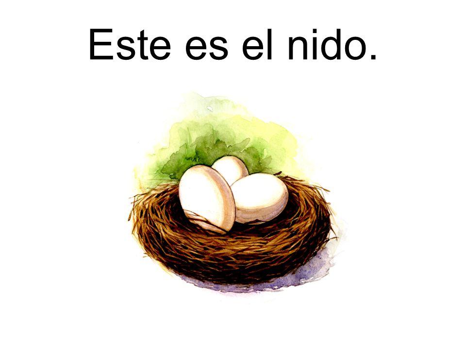 Este es el nido.