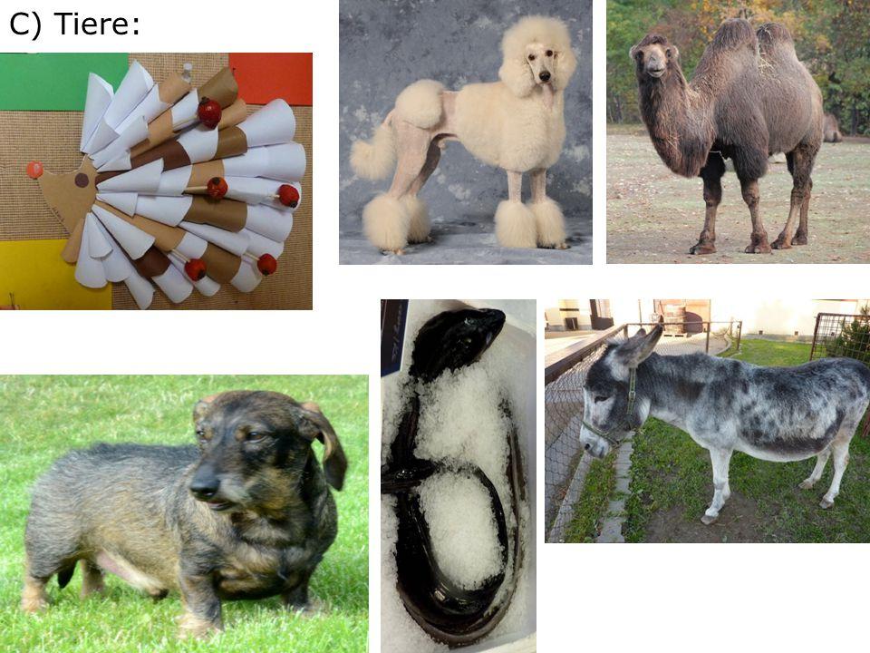 C) Tiere: