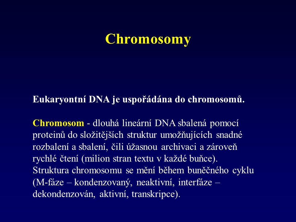 Eukaryontní DNA je uspořádána do chromosomů. Chromosom - dlouhá lineární DNA sbalená pomocí proteinů do složitějších struktur umožňujících snadné rozb