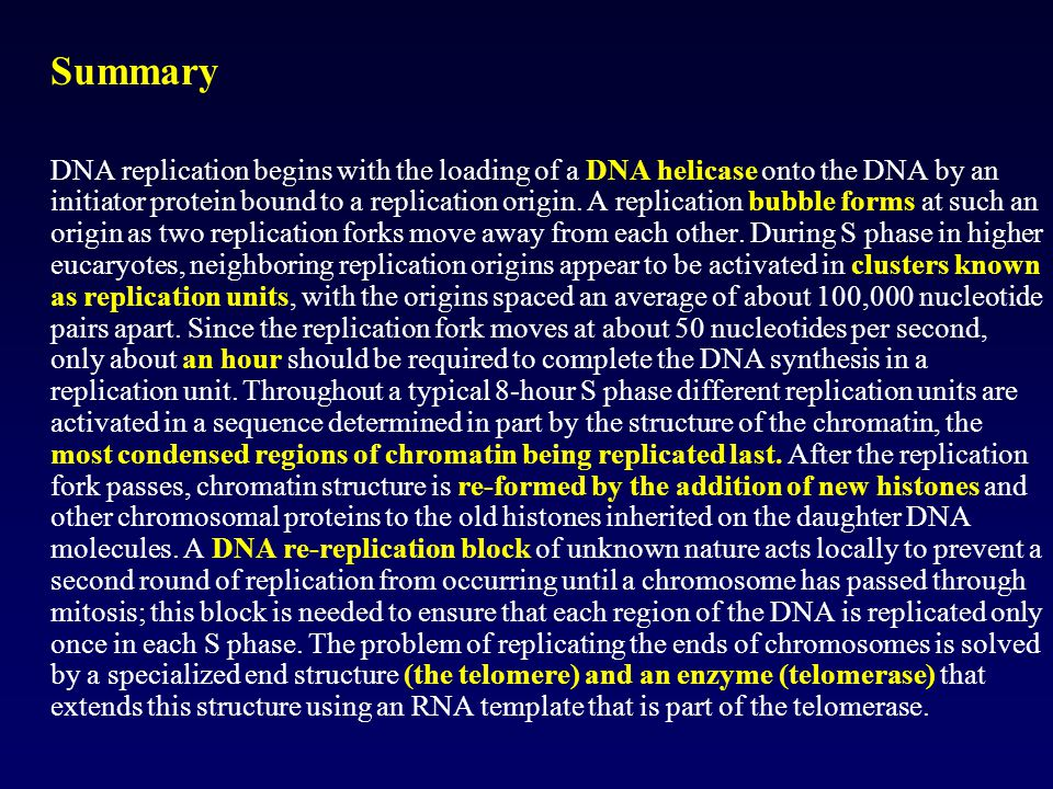 Summary DNA replication begins with the loading of a DNA helicase onto the DNA by an initiator protein bound to a replication origin. A replication bu