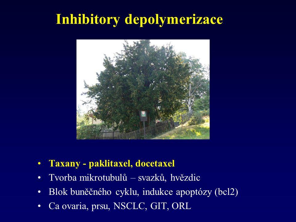 Inhibitory depolymerizace Taxany - paklitaxel, docetaxel Tvorba mikrotubulů – svazků, hvězdic Blok buněčného cyklu, indukce apoptózy (bcl2) Ca ovaria,