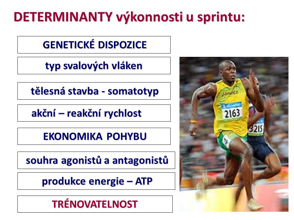 DETERMINANTY výkonnosti u sprintu: GENETICKÉ DISPOZICE GENETICKÉ DISPOZICE TRÉNOVATELNOST typ svalových vláken akční – reakční rychlost akční – reakčn