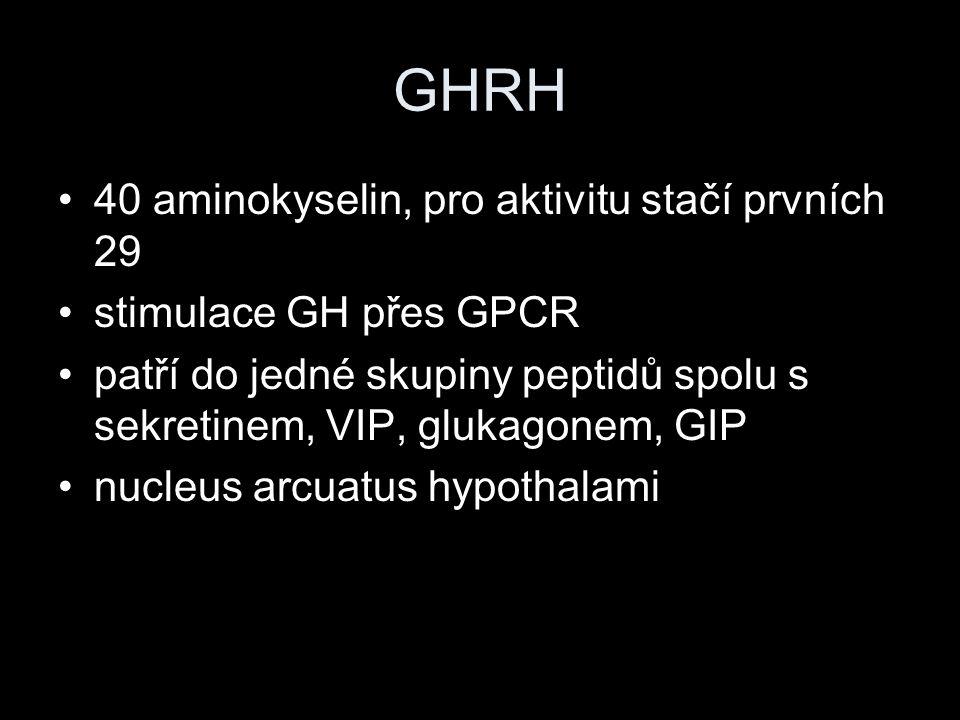 GHRH 40 aminokyselin, pro aktivitu stačí prvních 29 stimulace GH přes GPCR patří do jedné skupiny peptidů spolu s sekretinem, VIP, glukagonem, GIP nuc
