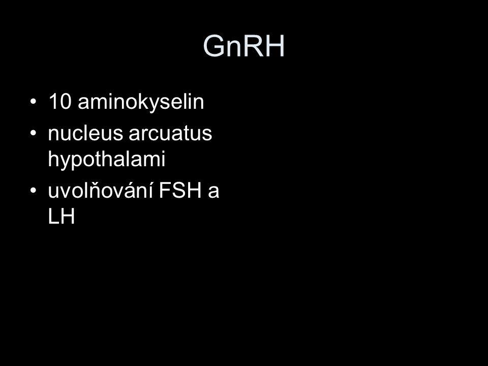 GnRH 10 aminokyselin nucleus arcuatus hypothalami uvolňování FSH a LH