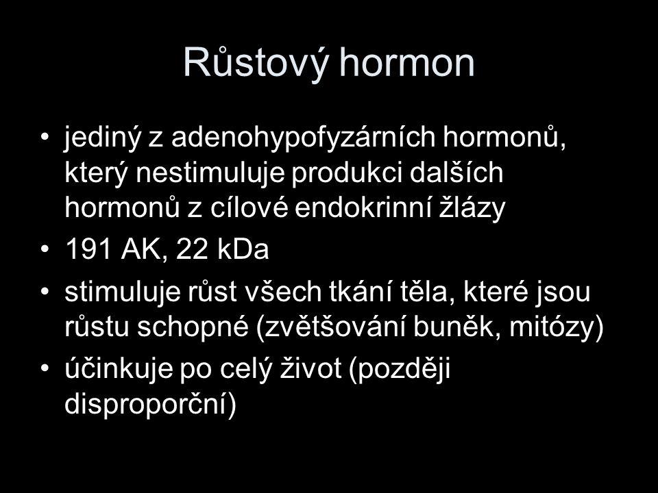 Růstový hormon jediný z adenohypofyzárních hormonů, který nestimuluje produkci dalších hormonů z cílové endokrinní žlázy 191 AK, 22 kDa stimuluje růst