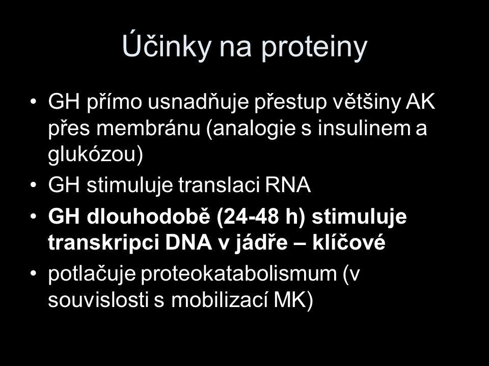 Účinky na proteiny GH přímo usnadňuje přestup většiny AK přes membránu (analogie s insulinem a glukózou) GH stimuluje translaci RNA GH dlouhodobě (24-