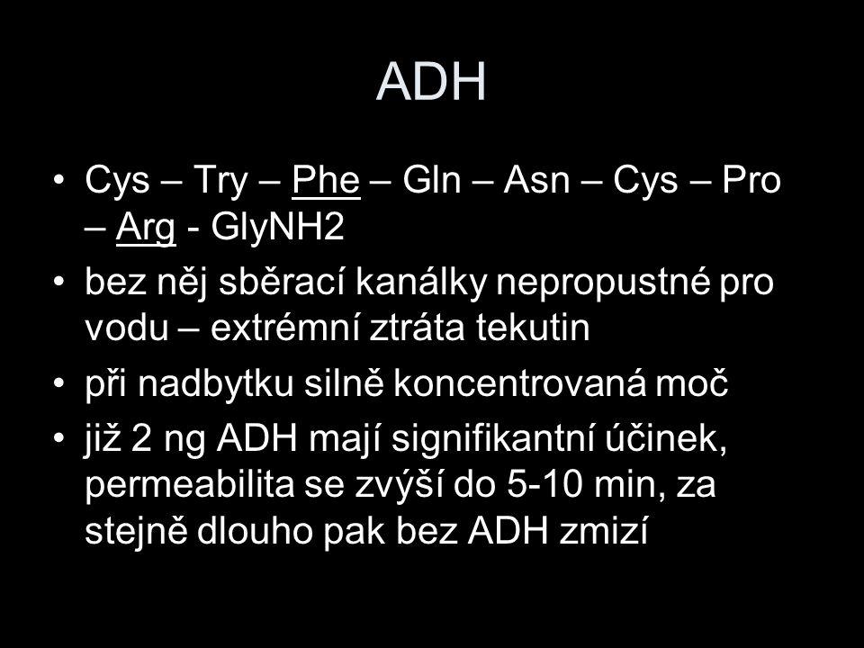 ADH Cys – Try – Phe – Gln – Asn – Cys – Pro – Arg - GlyNH2 bez něj sběrací kanálky nepropustné pro vodu – extrémní ztráta tekutin při nadbytku silně k