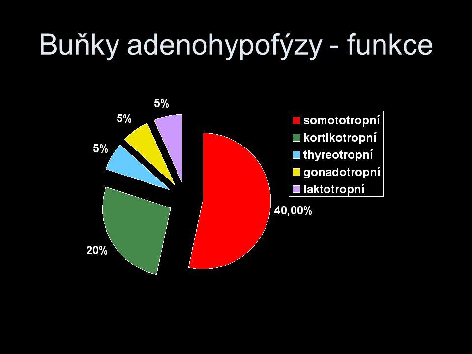 Hypothalamus srdce limbického systému funkce vegetativní, emoce a chování a endokrinní sekreci AH zásadně reguluje (mimo PRL), pro NH hormony přímo syntetizuje