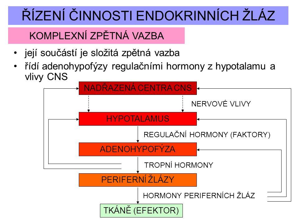 ŘÍZENÍ ČINNOSTI ENDOKRINNÍCH ŽLÁZ KOMPLEXNÍ ZPĚTNÁ VAZBA její součástí je složitá zpětná vazba řídí adenohypofýzy regulačními hormony z hypotalamu a v