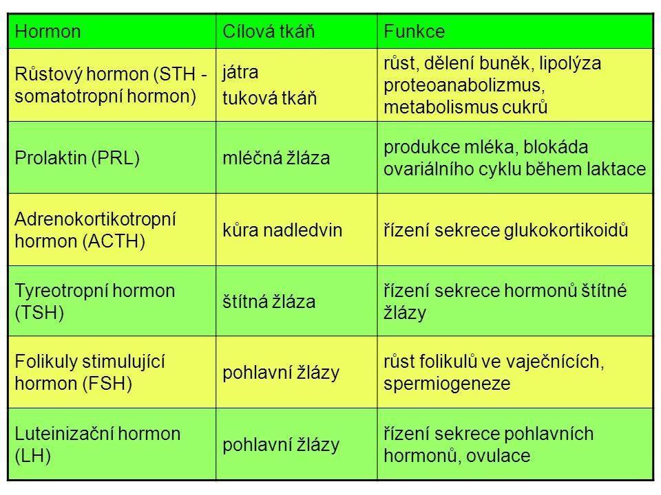 HormonCílová tkáňFunkce Růstový hormon (STH - somatotropní hormon) játra tuková tkáň růst, dělení buněk, lipolýza proteoanabolizmus, metabolismus cukr
