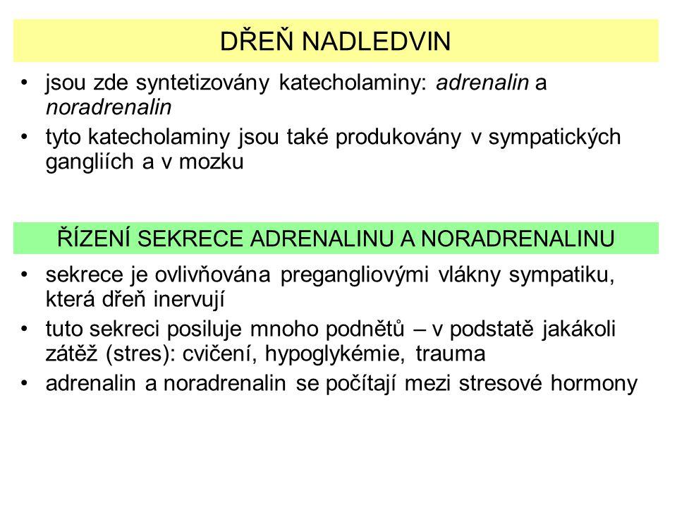 DŘEŇ NADLEDVIN jsou zde syntetizovány katecholaminy: adrenalin a noradrenalin tyto katecholaminy jsou také produkovány v sympatických gangliích a v mo
