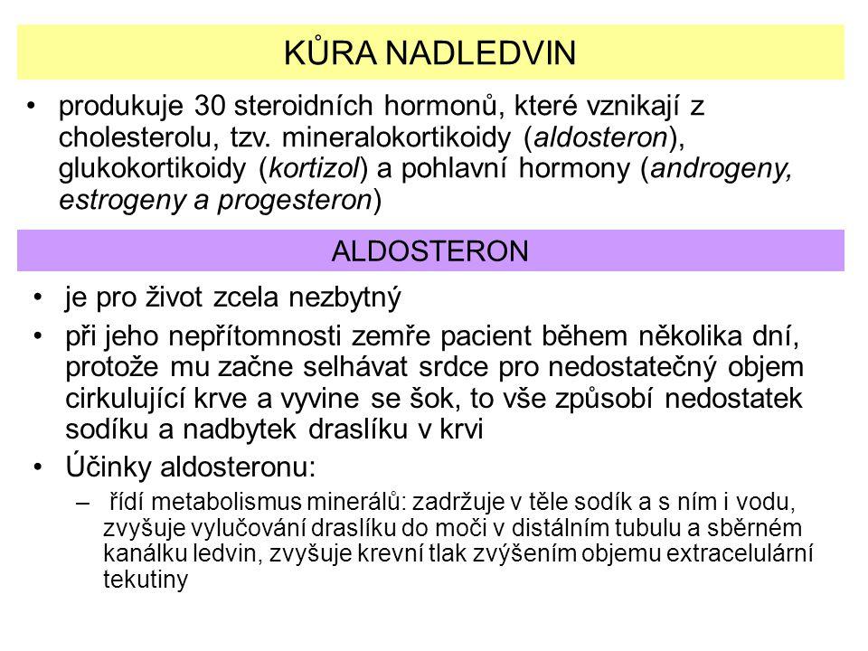 KŮRA NADLEDVIN produkuje 30 steroidních hormonů, které vznikají z cholesterolu, tzv. mineralokortikoidy (aldosteron), glukokortikoidy (kortizol) a poh