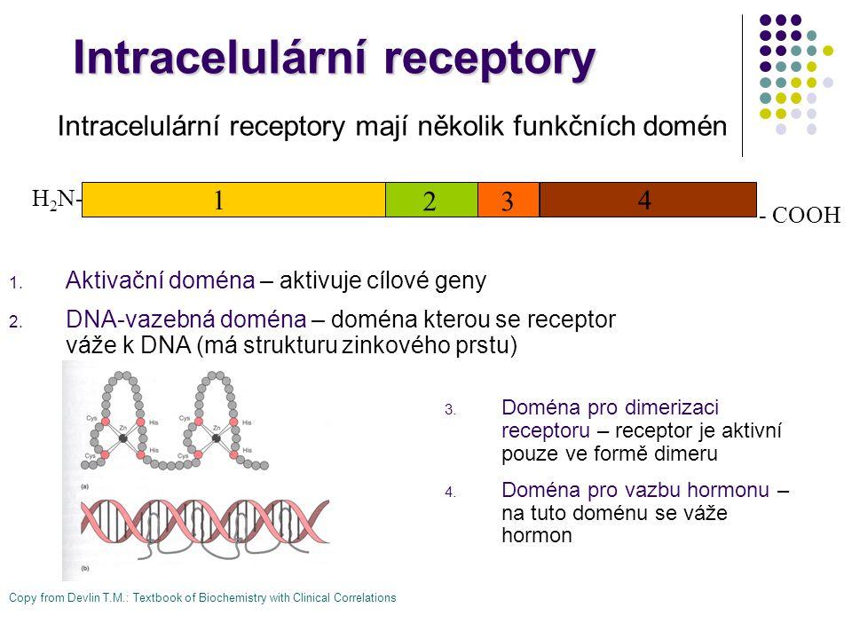 1. Aktivační doména – aktivuje cílové geny 2. DNA-vazebná doména – doména kterou se receptor váže k DNA (má strukturu zinkového prstu) Intracelulární
