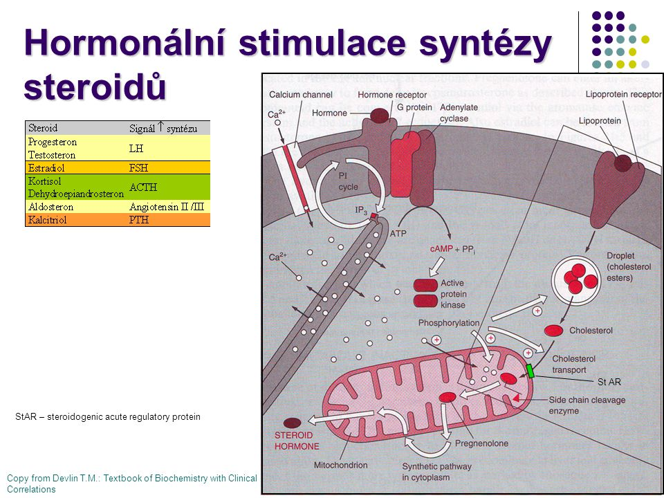 Hormonální stimulace syntézy steroidů Copy from Devlin T.M.: Textbook of Biochemistry with Clinical Correlations St AR StAR – steroidogenic acute regulatory protein