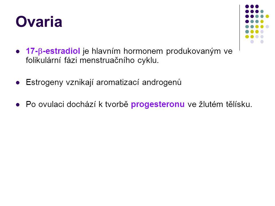 Ovaria 17-  -estradiol je hlavním hormonem produkovaným ve folikulární fázi menstruačního cyklu. Estrogeny vznikají aromatizací androgenů Po ovulaci