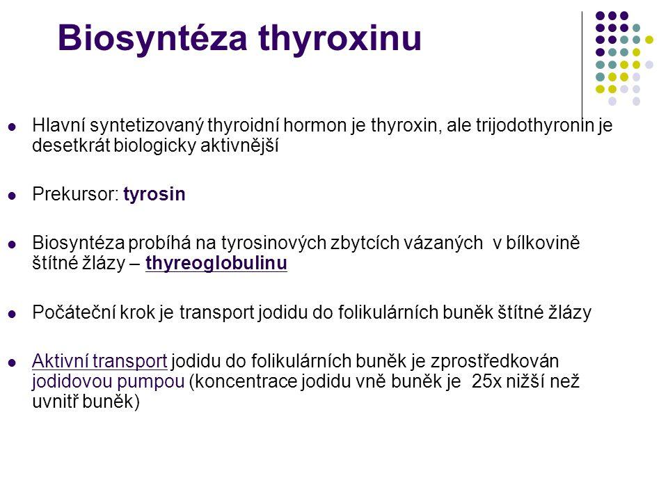 Biosyntéza thyroxinu Hlavní syntetizovaný thyroidní hormon je thyroxin, ale trijodothyronin je desetkrát biologicky aktivnější Prekursor: tyrosin Bios