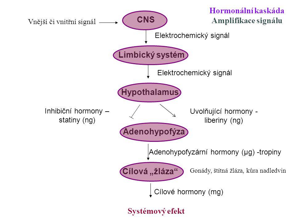 """CNS Limbický systém Hypothalamus Adenohypofýza Cílová """"žláza"""" Vnější či vnitřní signál Elektrochemický signál Uvolňující hormony - liberiny (ng) Adeno"""