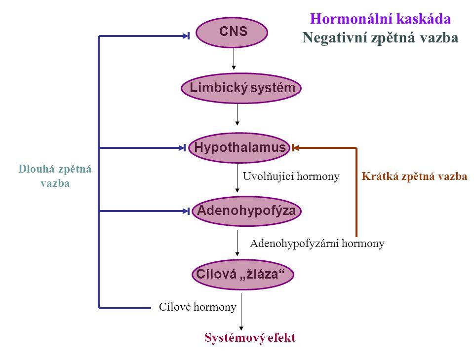 """CNS Limbický systém Hypothalamus Adenohypofýza Cílová """"žláza"""" Uvolňující hormony Adenohypofyzární hormony Cílové hormony Systémový efekt Krátká zpětná"""